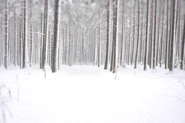 snowstorm3-tiltshift