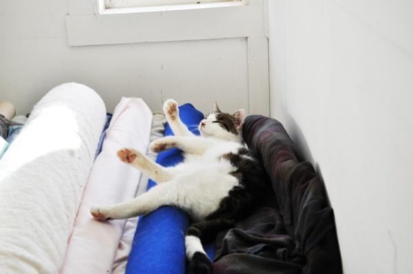 kattpåtyg5