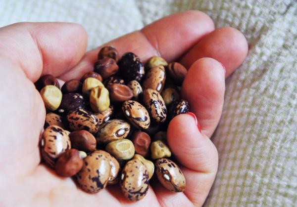 bean2