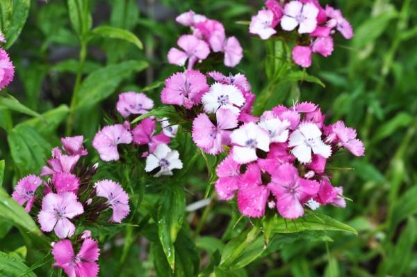 blomm2