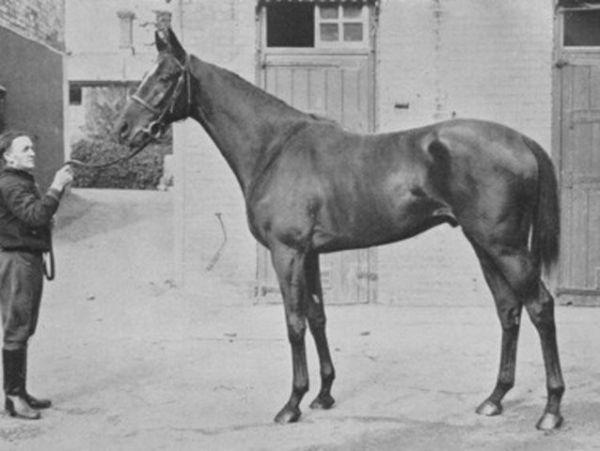 Horse_Bahram-_3big