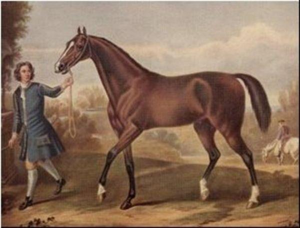 Horse_Darley_Arabian_DB-_2big