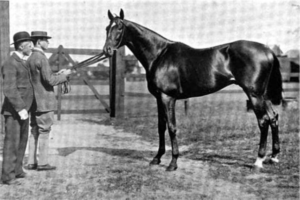 Horse_Isinglass-big