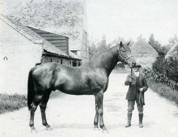 Horse_Swynford-big